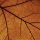 Drudkh - Paysage d'Hiver - Split LP